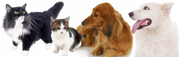Cat, kitten and dogs