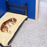 Dog resort room
