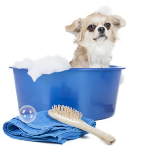 Dog having a bath ready for grooming