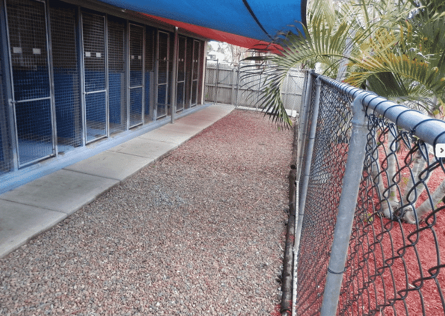 Northshore Pet Resort dog accommodation