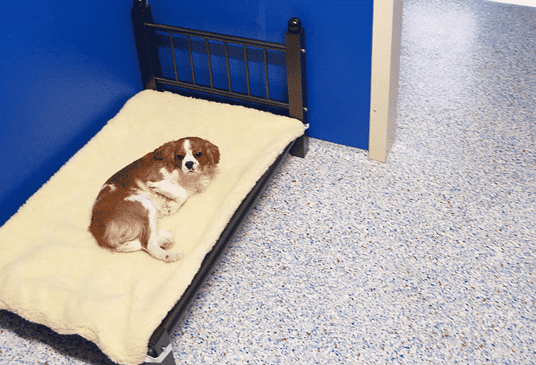 Northshore Pet Resort dog on bed
