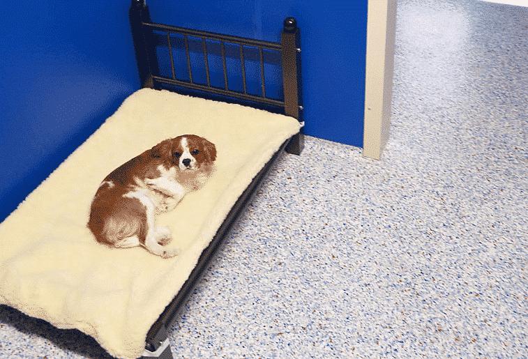 Northshore Pet Resort dog on bed
