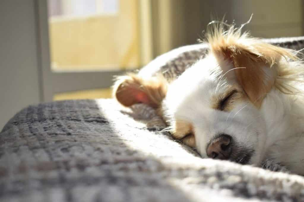 cute dog sleeping