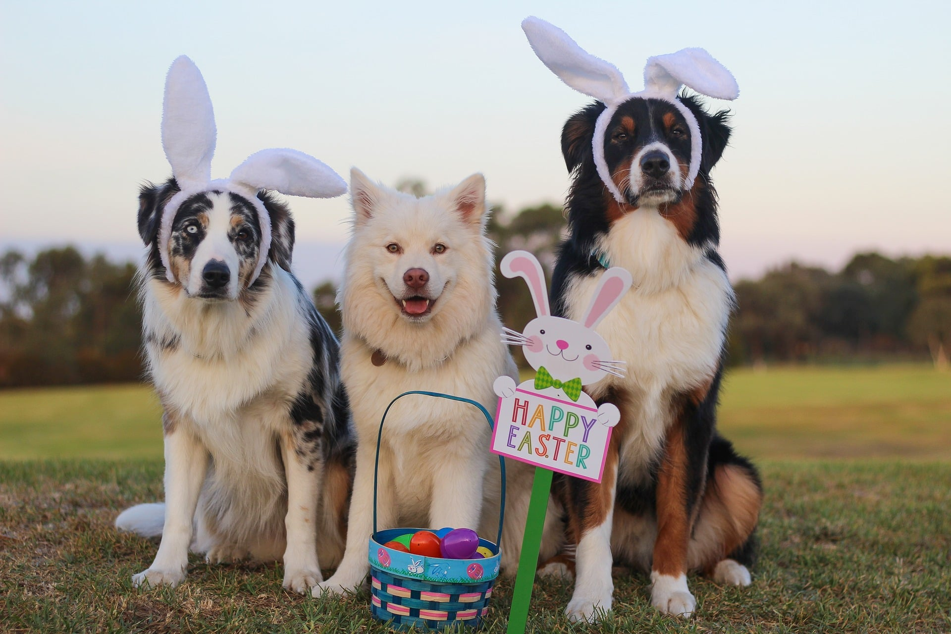 three dogs wearing easter bunny ears